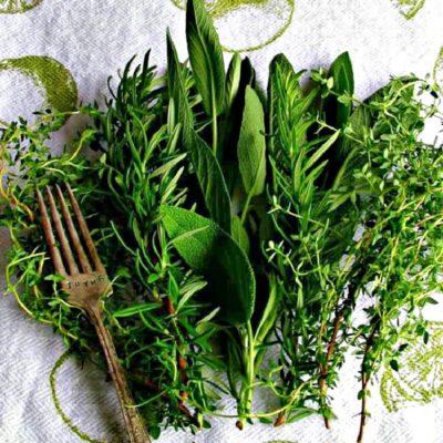 How to Preserve Fresh Herbs – Best Method!
